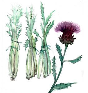 Pair cardoon with wine