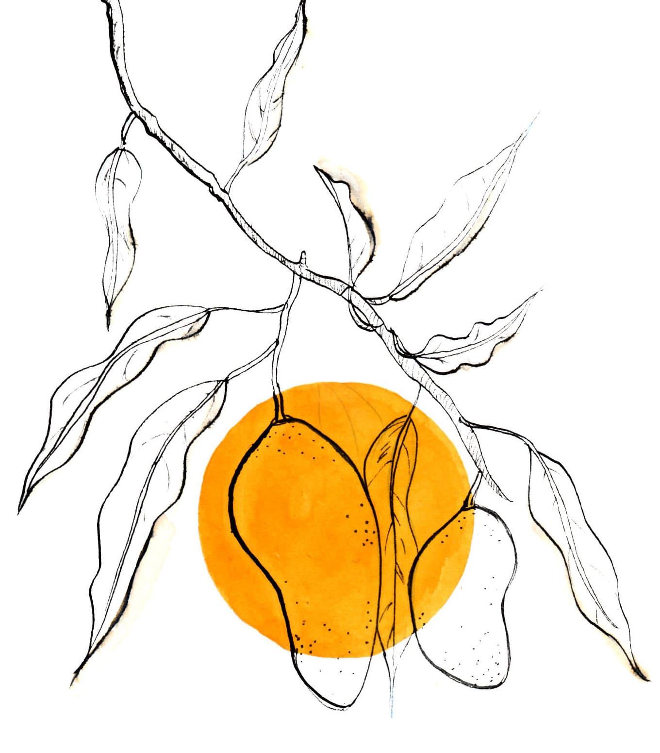 sessertmangue vin mango wine