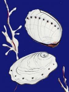 abalone shellfish